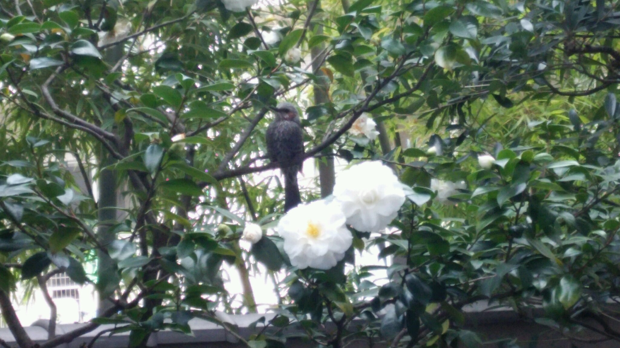 2016春彼岸 鳥